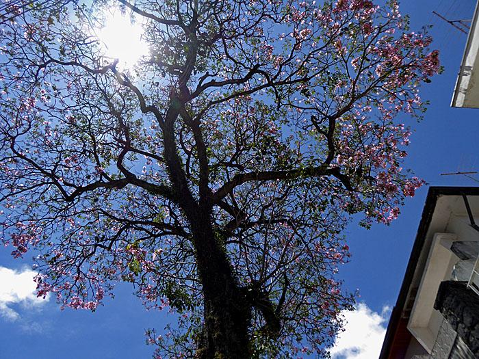 Foto van boom met bloesem tegen blauwe lucht