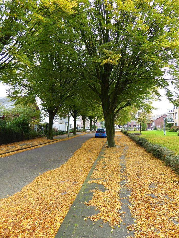 Foto van straat met gele bladeren