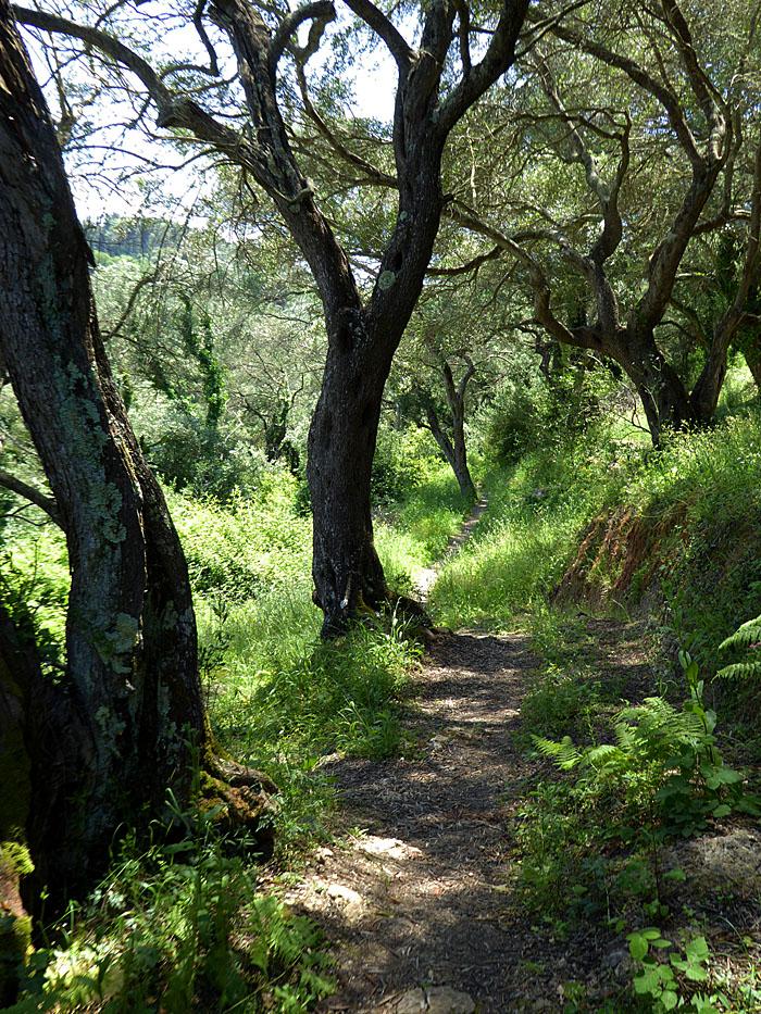 Foto van pad tussen bomen