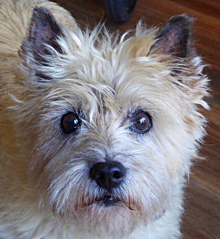 Foto van kleine hond