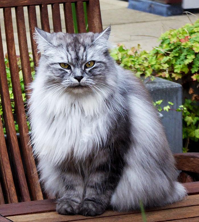 Foto van langharige kat