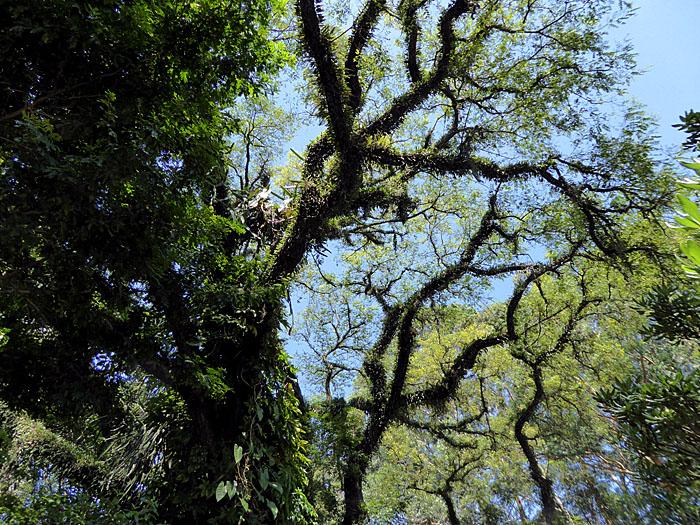 Foto van boom vol groei
