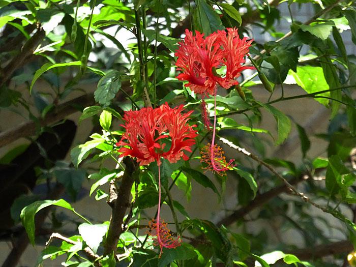 Foto van hengende rode bloemen