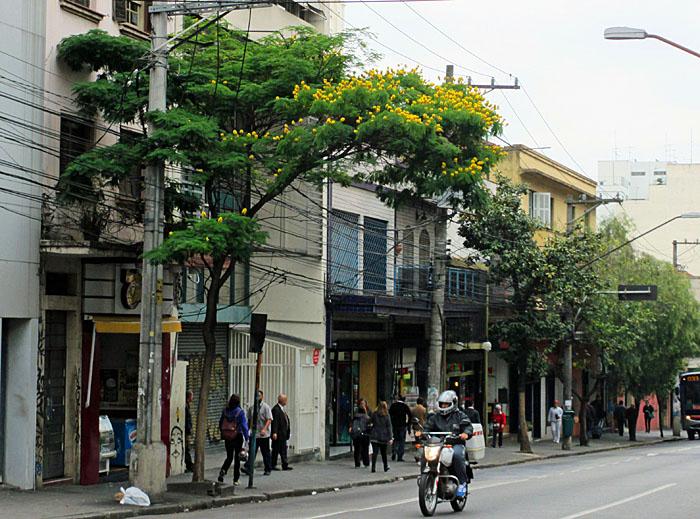 Foto van straat met boom met gele bloemen