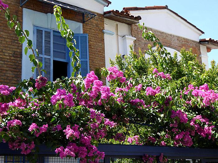 Foto van huis met roze bloemen