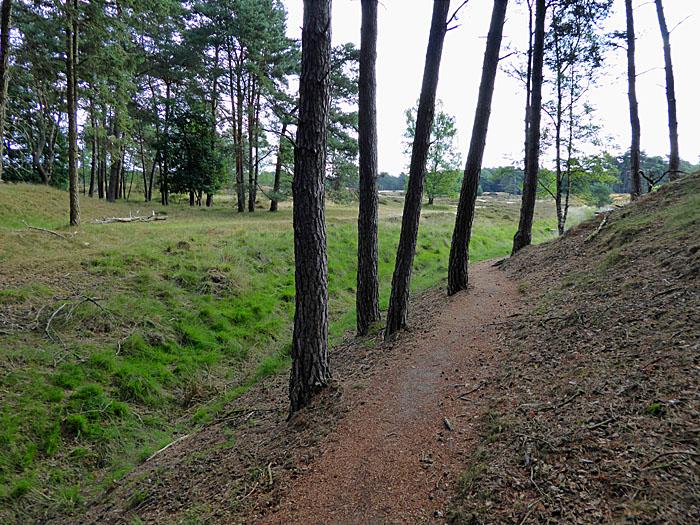 Foto van pad met bomen