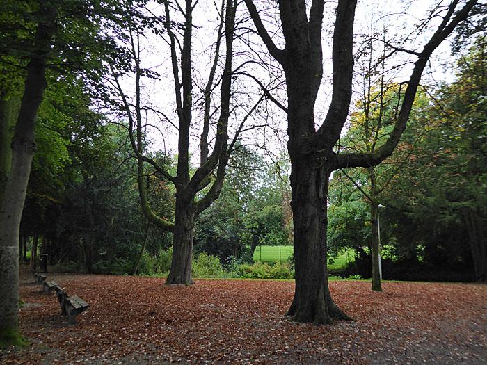 Foto van bankjes in bos