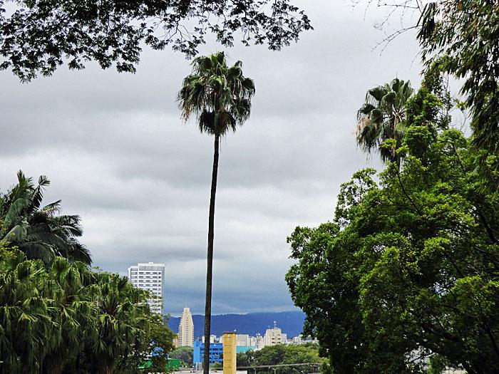 Foto van uitzicht met hoge palmboom