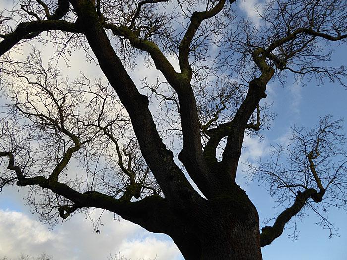 Foto van boomtaken tegen lucht