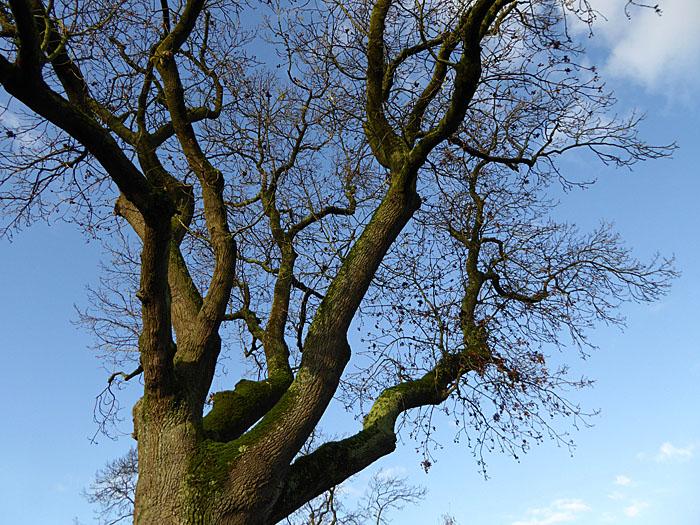Foto van boom tegen hemel