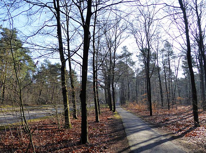 Foto van fietspad en weg door bos
