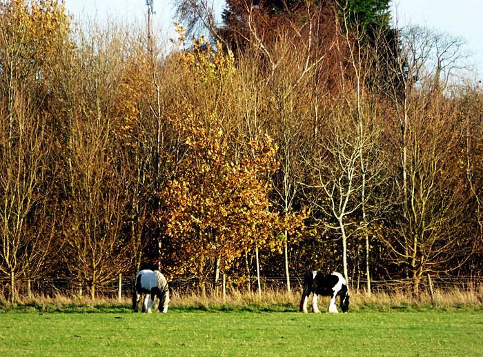Foto van paarden in weiland