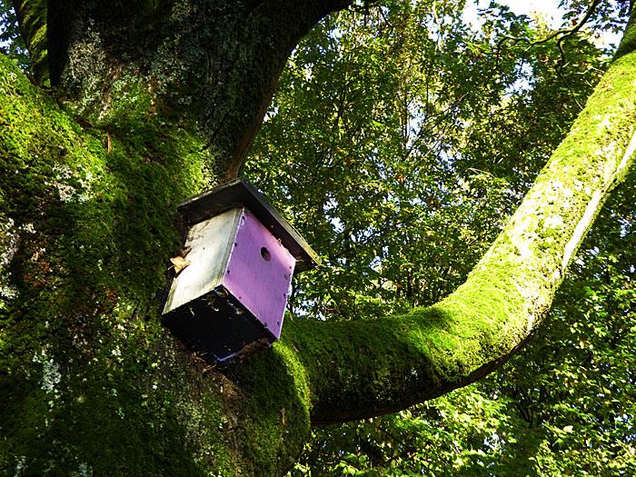 Foto van vogelhuisje aan boom