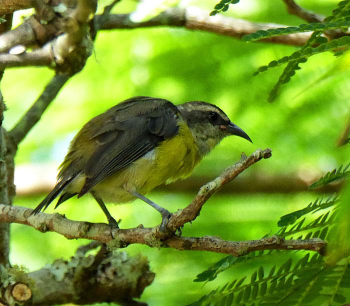 Foto van vogeltje op tak