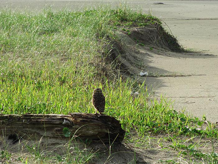 Foto van uil op boomstam
