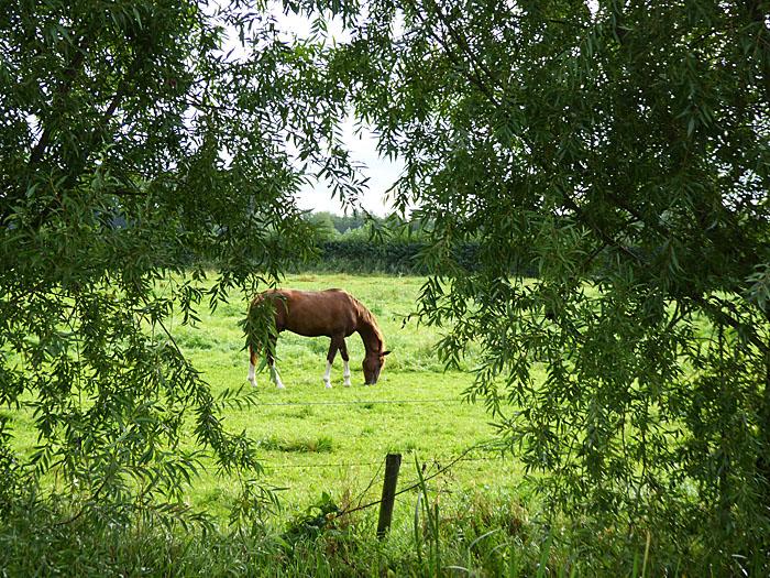 Foto van paard in weiland
