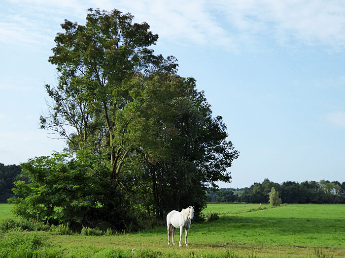 Foto van paard onder boom