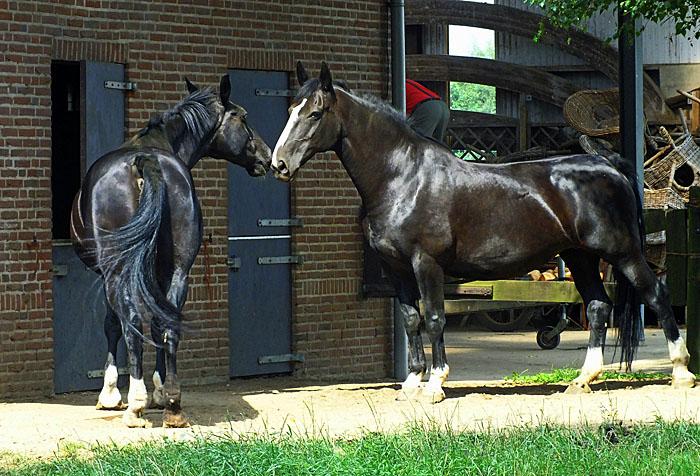 Foto van twee paarden