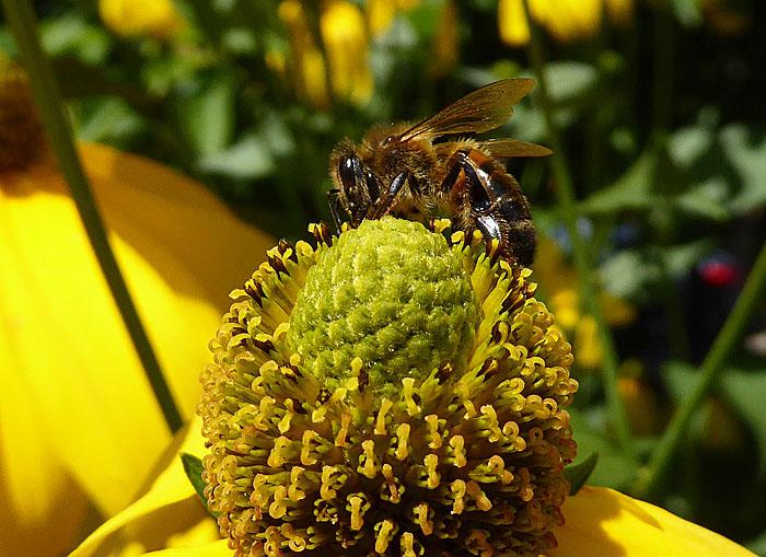 Foto van insect op bloem