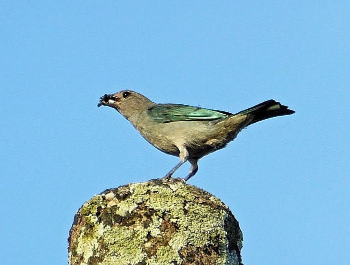 Foto van vogel met prooi in snavel
