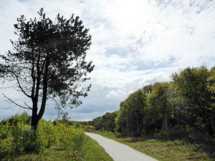 Foto van weg tussen boom en bos
