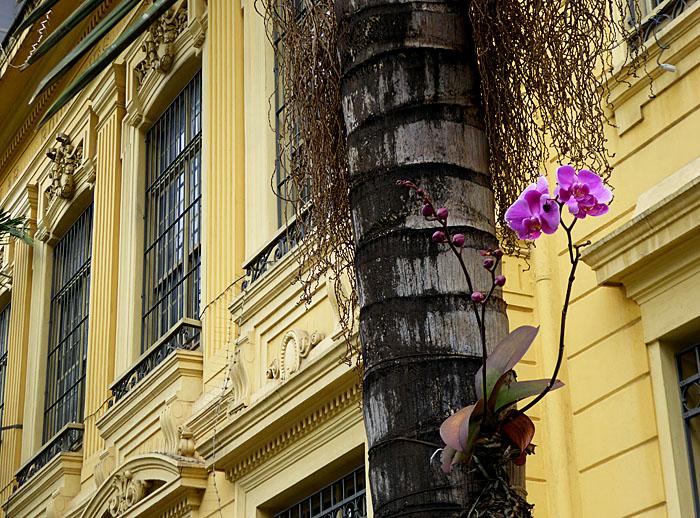 Foto van rchidee aan boom voor geel gebouw