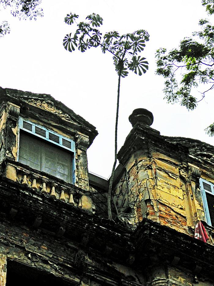 Foto van boompje op dak