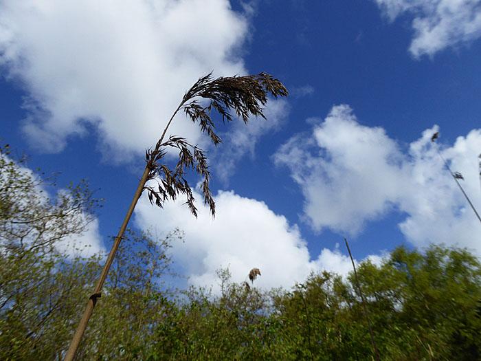 Foto van halm tegen wolkenlucht