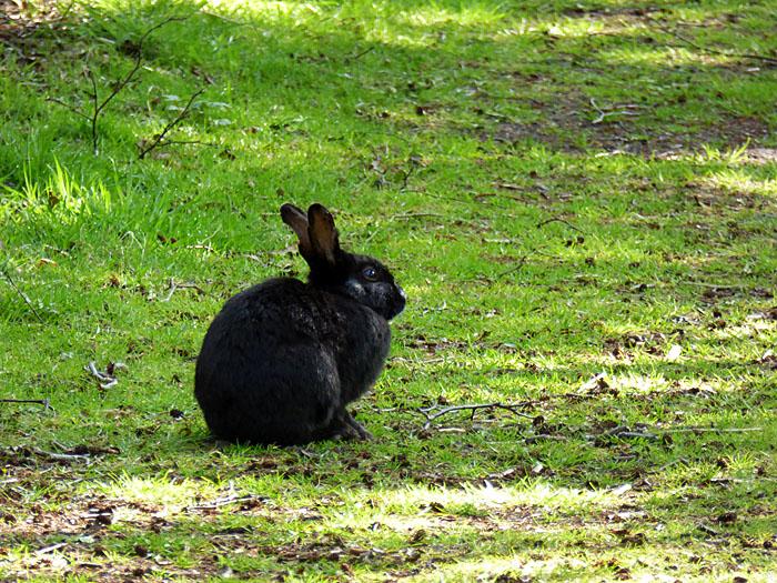 Foto van konijn