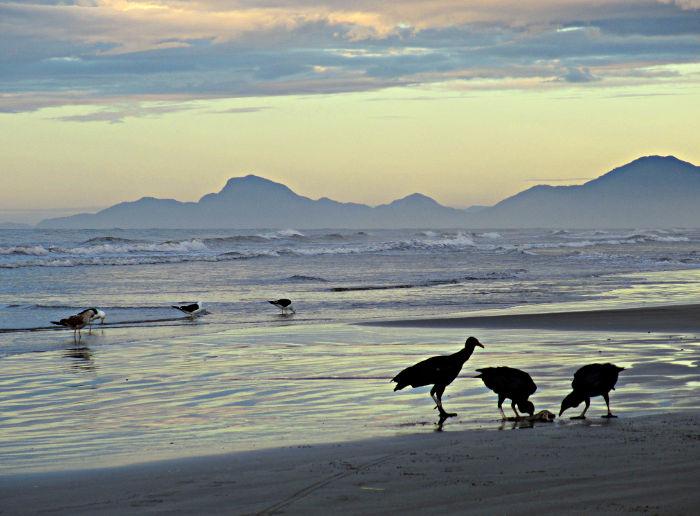 Foto van gieren aan het strand