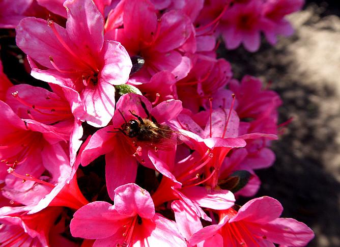 Foto van insect op bloemen