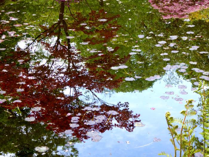 Foto van reflectie in vijver in park