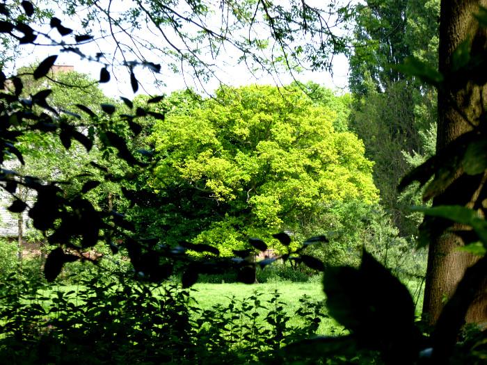 Foto van groene boom in park