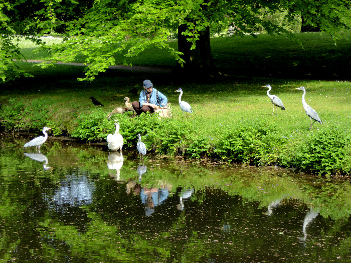 Foto van vrouw omringd door reigers, eenden en zwaan