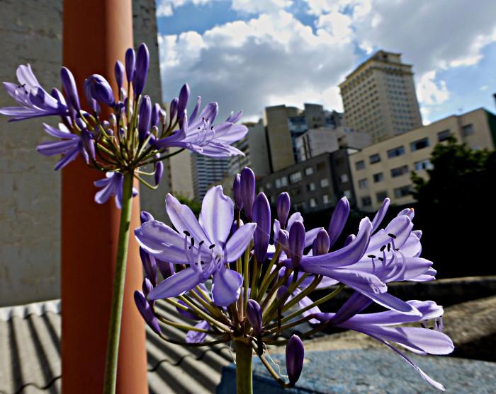 Foto van bloemen in vesnterbank en gebouwen op achtergrond