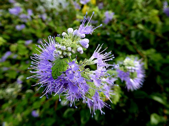 Foto van lila bloemetjes