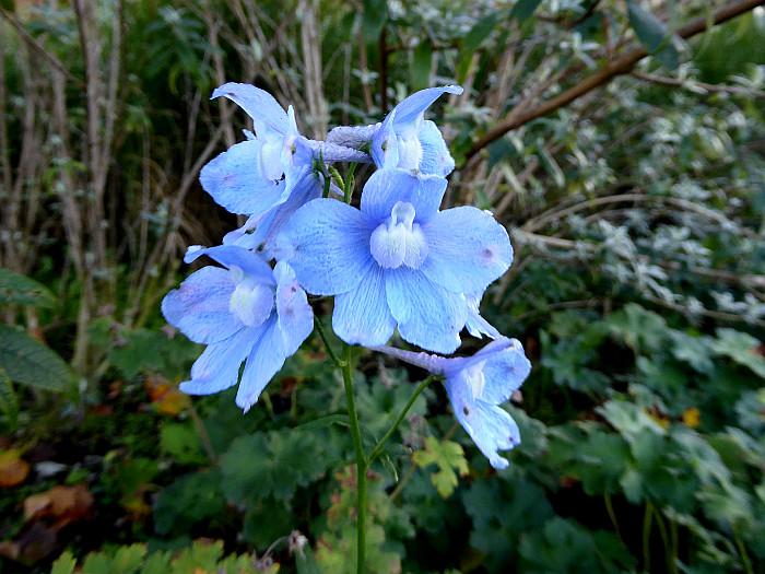 Foto van blauwe bloemen