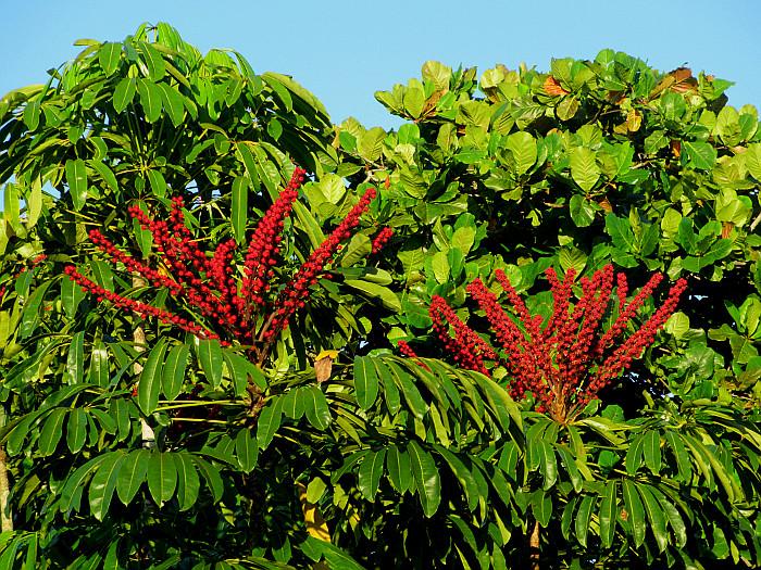 Foto van rode bloemen hoog in boom