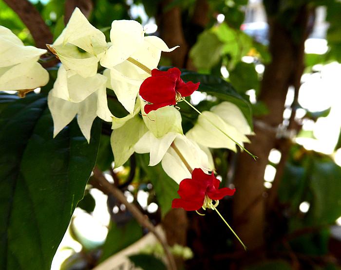 Foto van roodwitte bloemen