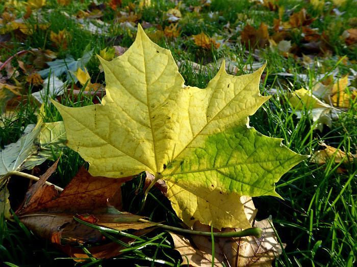 Foto van geelgroen blad