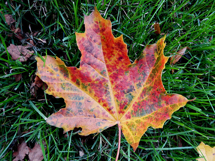 Foto van roodgeel blad