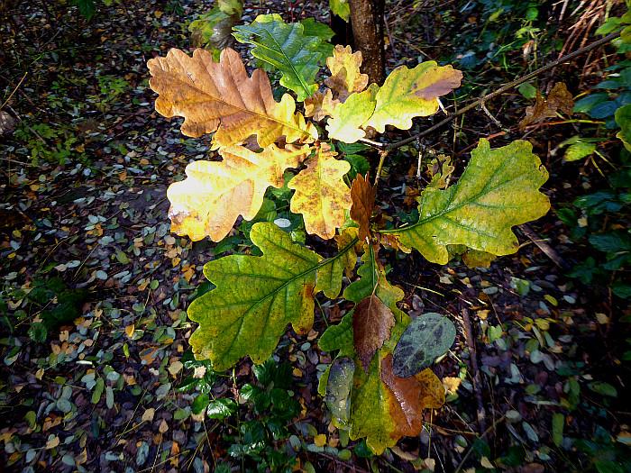 Foto van verschillende kleuren blad