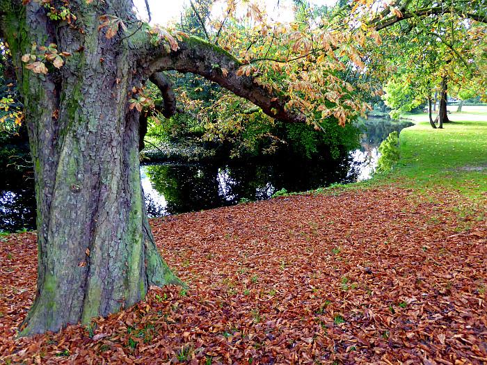 Foto van dorre bladeren onder boom