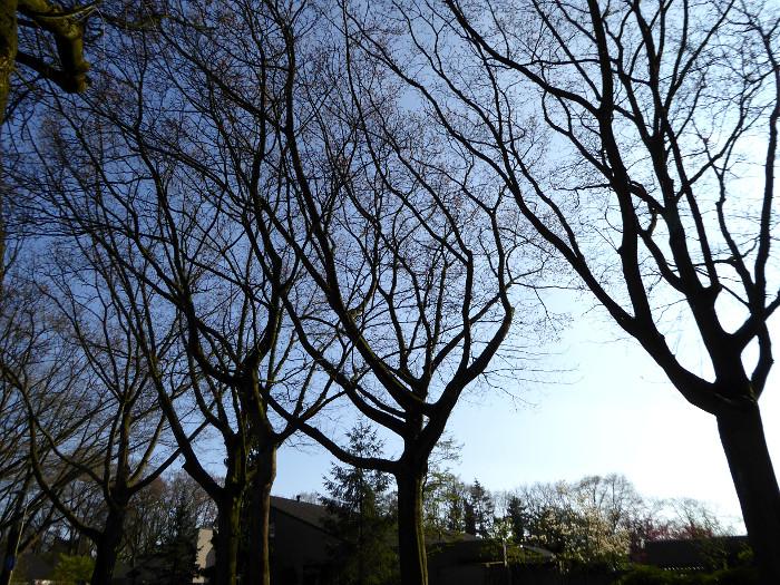 Foto van kale bomen bij vallen van de avond