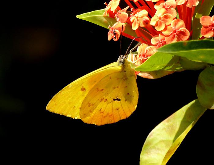 Foto van vlinder en mier