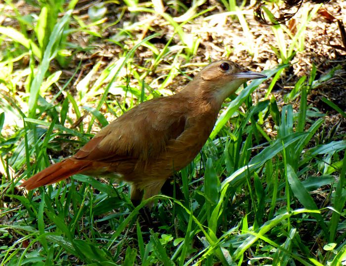 Foto van bruine vogel