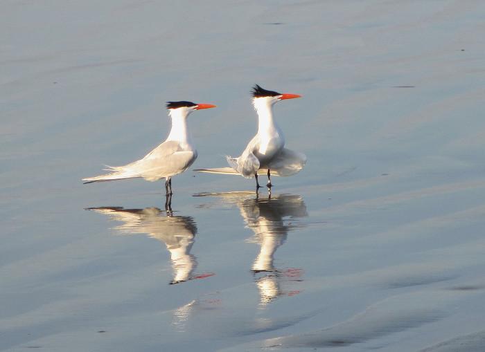 Foto van vogels op strand