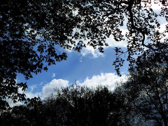 Foto van wolkenlucht gezien door takken