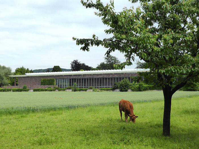Foto van koe in weiland voor museum