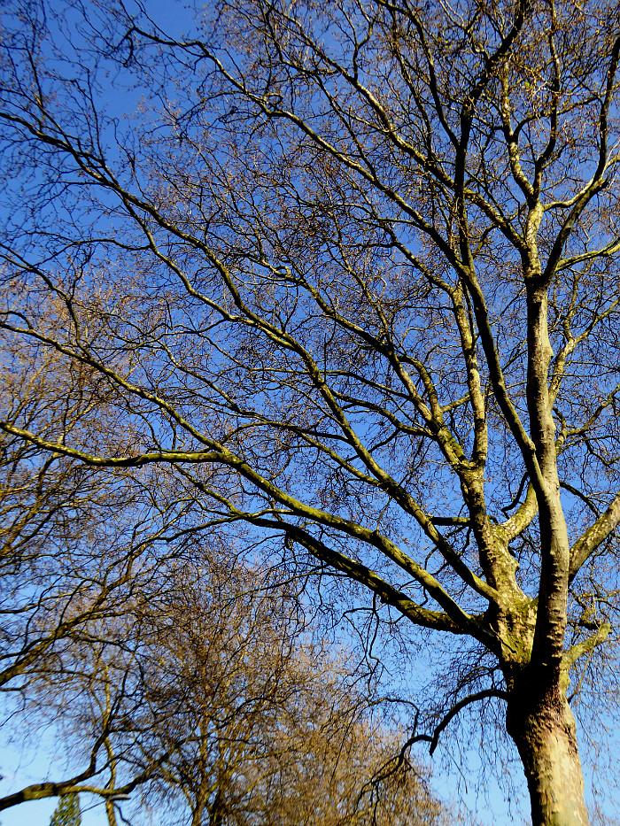 Foto van kale bomen